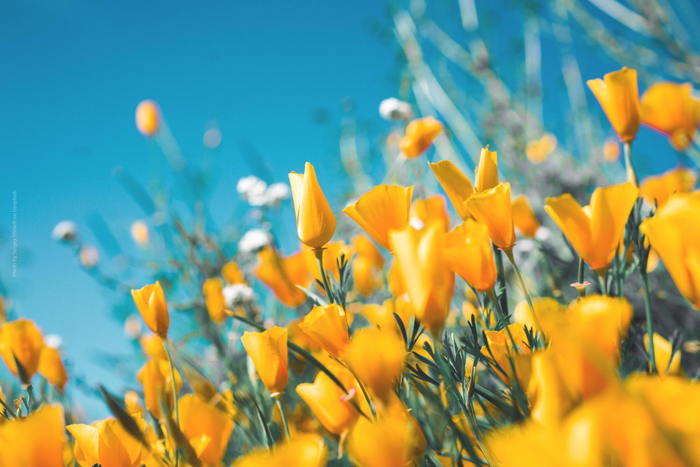 Cambio di stagione: sintomi e rimedi